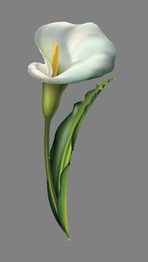 Necrologi Pistoia - maria grazia bardi